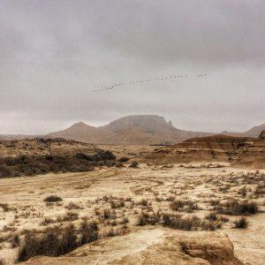 Das de bruma y grullas   bardenas deserthellip