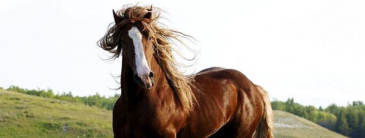 cab-caballo