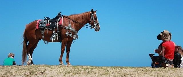 caballos-paseo-ecuestre