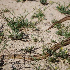 Nuestras amigas en bardenas  bardenas bardenasreales spain navarra deserthellip